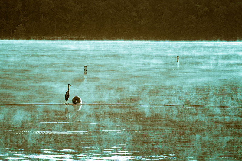 7.24.19 - Prairie Creek Marina: Great Blue Heron
