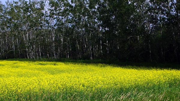 Fields in Bloom 1