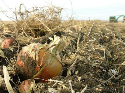 Prairie Crops