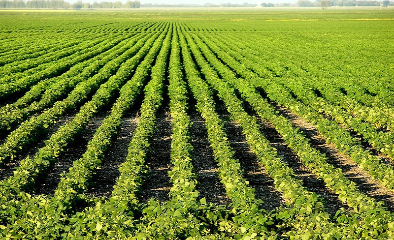 Row crop near Portage