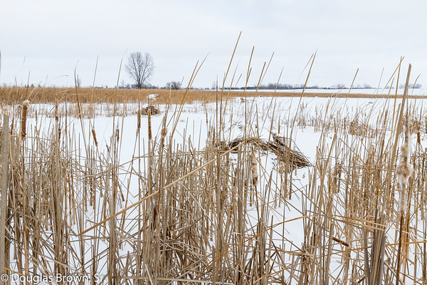 Winter Marshland