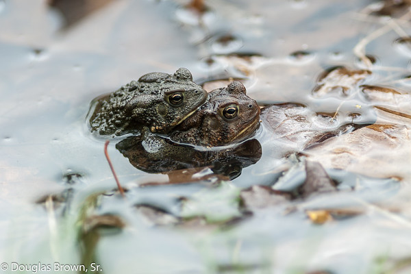 Toad Mates