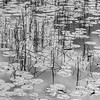 Wetlands Shoreline in B&W