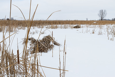 Winter Prairie Pothole