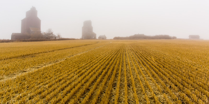 Grain Elevators in the Fog