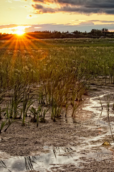 Sunset over Swamp
