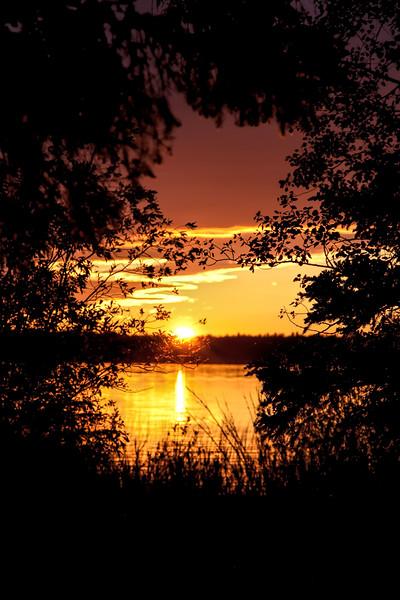 Sunset through Bush