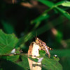 """Grasshopper"" by  Brooke, 15 