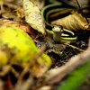 """Garter Snake"" by Mackenzie, 16  