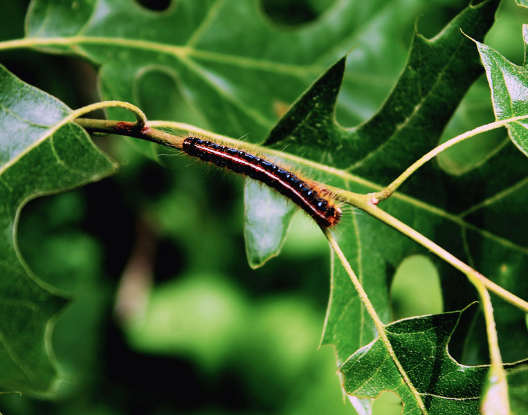 """Caterpillar"" by Carolina, 17  