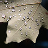 """This Leaf"" by Laura 