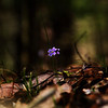 """The Lonely Flowers"" by Julianna, 15  