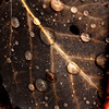 """Raindrops"" by Destiny, 16  