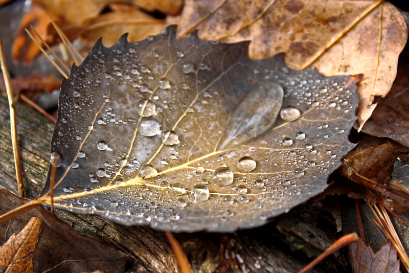 """Leaf"" by Tierra, 16 