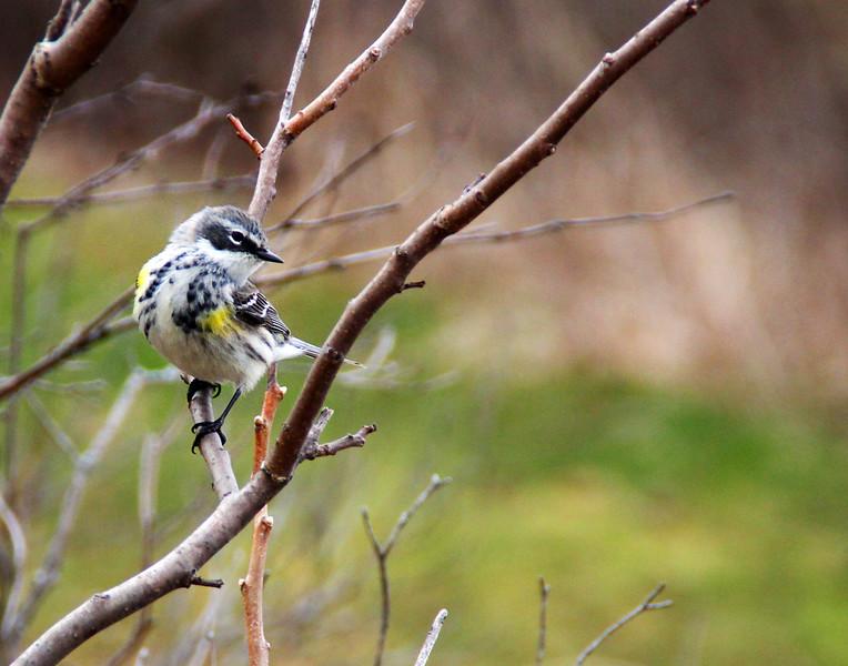 """Whitebird"" by Lorena, 16  | Prairieview Nature Photography"