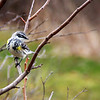 """Whitebird"" by Lorena, 16  