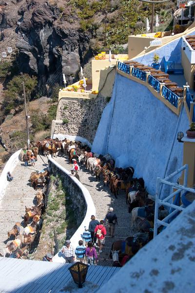 Thira- the famous donkeys