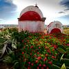 Mykonos island - geraniums in the churchyard.