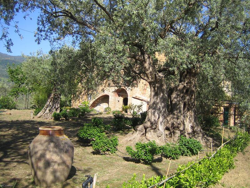 Casa Miglilaca, olive farm in Sicily