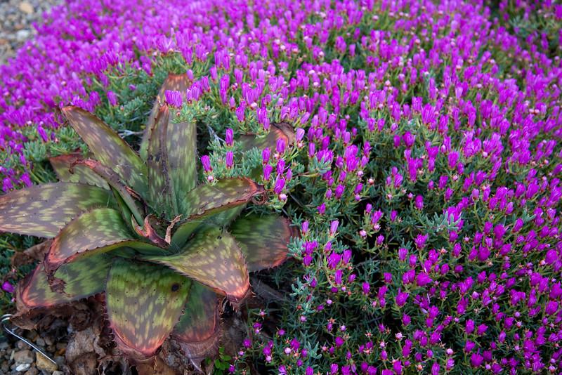 Botanical garden in Auckland