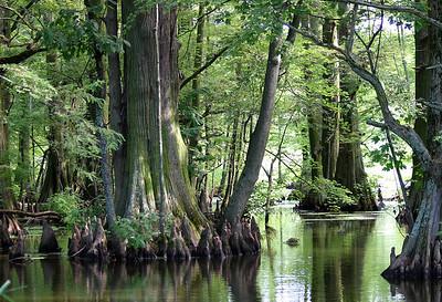 Reelfoot Lake Tennessee