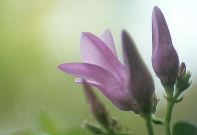 Behind Purple Flowers