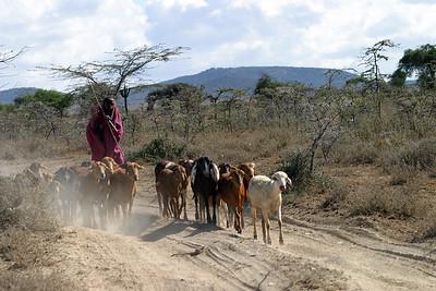 Masai people seen leaving the Masai Mara on return to Nairobi, November 20, 2005.