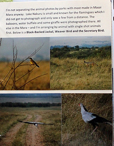 Scrapbook Page showing Weaver Bird & Secretary Bird + a jackal