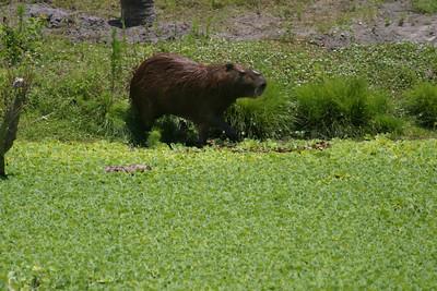 Gulf Breeze Zoo near Pensacola, FL, May 2004