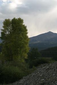 Tree at Breckenridge, CO, August 28, 2005