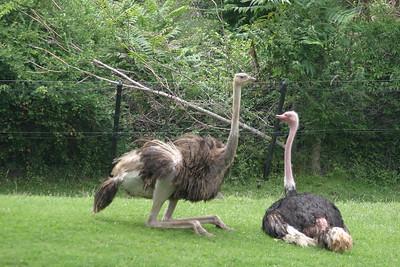 Indianapolis Zoo, Indianapolis, Indiana, July 17, 2005