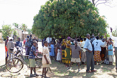 Mango Tree, Kwangwa, Tanzania on Novembere 8, 2005