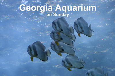 Georgia Aquarium, Atlanta