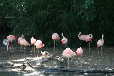 Memphis Zoo on June 2, 2008