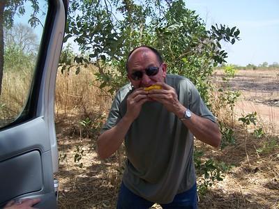 Charlie Eating a Ripe Mango