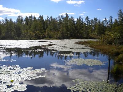 Volo Bog State Natural Area