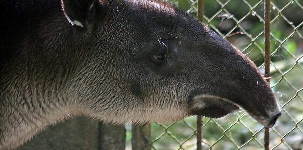 Zoo Nispero