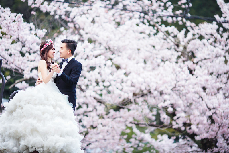 kyoto cherry blossom pre wedding