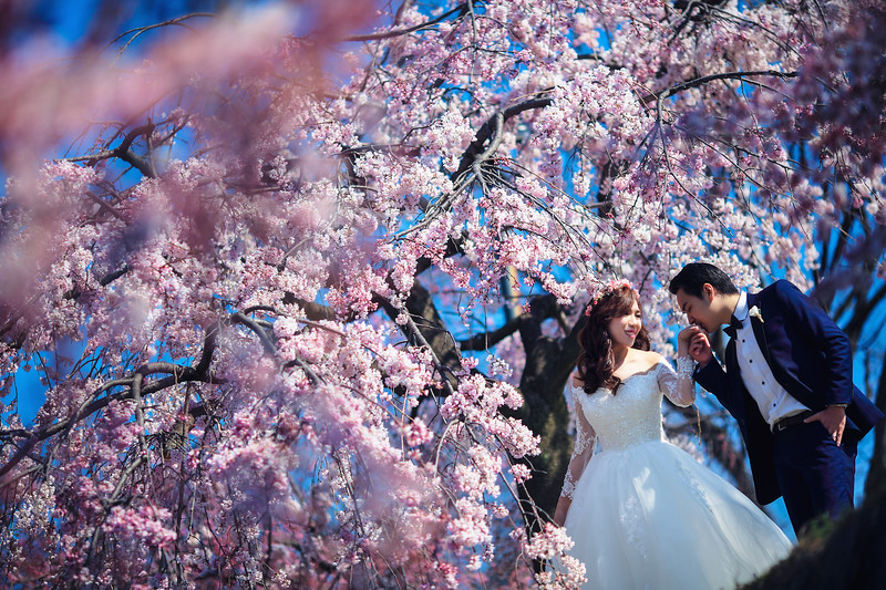 kyoto sakura pre wedding