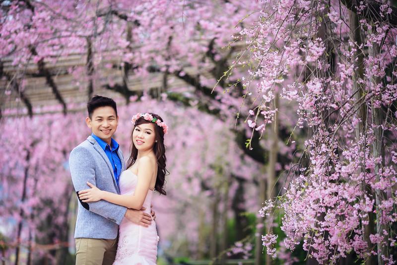 sakura pre wedding in japan