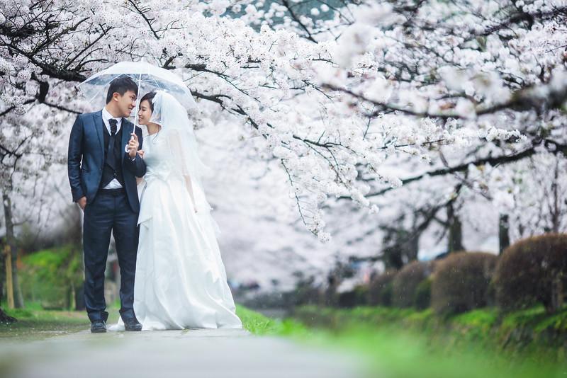 sakura pre wedding
