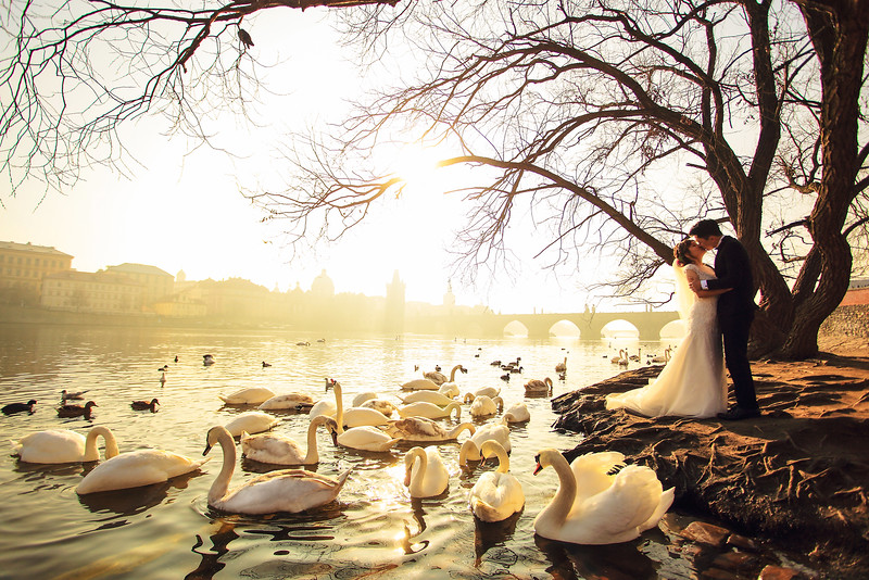 prague swan river