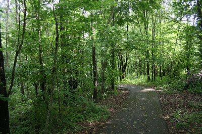 Big Cypress Tree State Park, TN