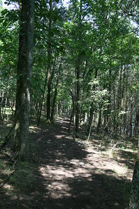 Bledsoe Creek State Park, TN