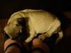 Sweet puppy dreams