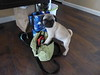 Roadtrip Ms Jeanie !!  Let's go to PETCO !!   I can ALMOST fit into your purse!