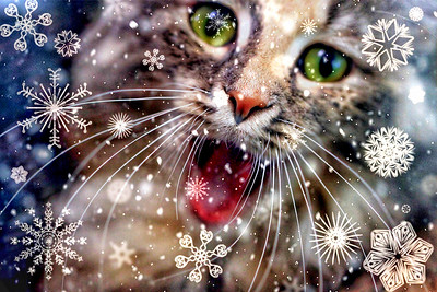 Cat-ching Snowflakes 2