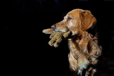 Dogs ~ Hunde