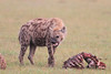 Spotted_Hyena_Mara_Asilia_Kenya0097