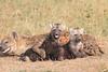 Spotted_Hyena_Mara_Asilia_Kenya0090